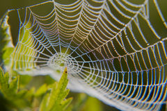 Web in dew. Early morning at dawn, spider webs and dew Stock Images