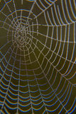 Web in dew. Early morning at dawn, spider webs and dew Stock Photography