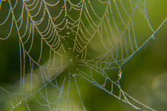 Web in dew. Early morning at dawn, spider webs and dew Stock Image