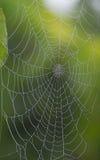 Web di Diamant Fotografia Stock Libera da Diritti