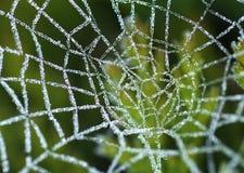 Web di ragni glassato Fotografia Stock