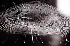 Web di ragni. Seppia Immagini Stock