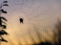 Web di ragno fotografie stock