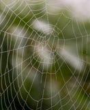 Web di ragno Immagini Stock
