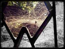Web di ragno Immagine Stock Libera da Diritti