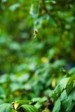 Web di ragno fotografia stock
