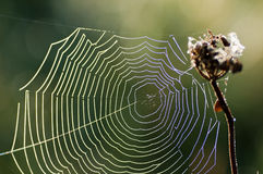 Web di ragno Fotografie Stock Libere da Diritti
