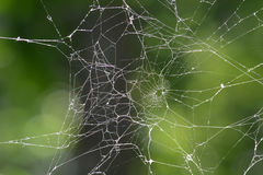 Web di ragno immagini stock libere da diritti