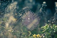 Web di ragno in autunno Immagine Stock