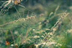 Web di ragno in autunno Immagini Stock Libere da Diritti