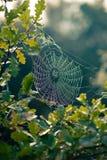 Web di ragno in autunno Fotografia Stock