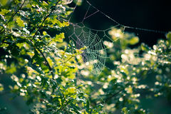 Web di ragno in autunno Fotografie Stock