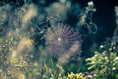 Web di ragno in autunno Fotografie Stock Libere da Diritti