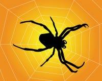 Web di ragno con Fotografia Stock Libera da Diritti