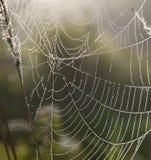Web di ragno con le gocce di rugiada Fotografie Stock Libere da Diritti