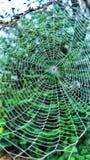 Web di ragno con le gocce di rugiada Fotografia Stock
