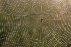 Web di ragno con rugiada Immagini Stock