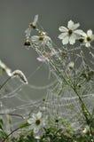 Web di ragno congelato Fotografia Stock Libera da Diritti