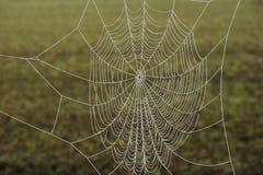 Web di ragno congelato Fotografia Stock