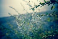 Web di Spyder Fotografia Stock