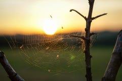 Web 2 do por do sol Imagens de Stock Royalty Free