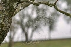 Web do ` s da aranha Imagem de Stock