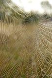 Web do ` s da aranha com gotas do orvalho no alvorecer fotos de stock royalty free