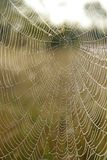 Web do ` s da aranha com gotas do orvalho no alvorecer fotografia de stock royalty free