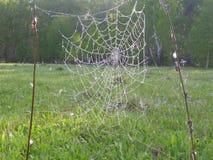 A Web do ` s da aranha nas madeiras cedo na manhã Fotografia de Stock Royalty Free