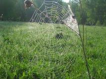 A Web do ` s da aranha nas madeiras cedo na manhã Imagens de Stock