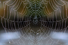 Web with drops of dew Royalty Free Stock Images