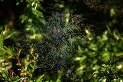 Web. Drops. Royalty Free Stock Photos