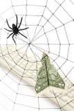 Web e dollaro di ragno Fotografie Stock