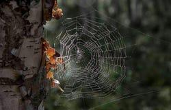 Web en el árbol en bosque foto de archivo
