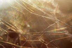 Web en el sol Imagen de archivo libre de regalías