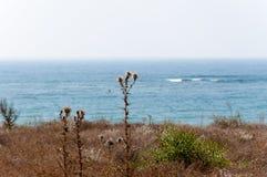 Web en la bardana contra el mar Foto de archivo libre de regalías