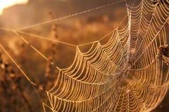 Web en rosée images stock