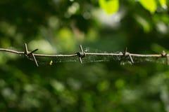 Web en un alambre de púas contra follaje imagen de archivo libre de regalías