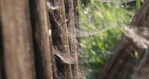 Web entre árvores secas no verão vídeos de arquivo