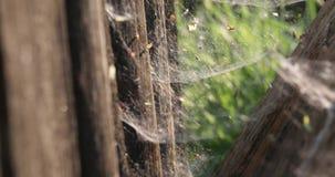 Web entre les arbres secs pendant l'été banque de vidéos
