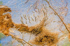 Web of Fall Web Worm Stock Photography