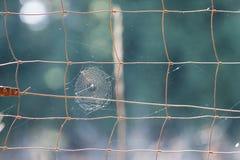 Web on fence Royalty Free Stock Photo