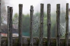 Web on fence Stock Photos