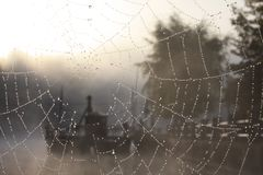 Web in the fog Royalty Free Stock Image