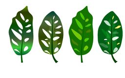 web Foglie verdi tropicali isolate su fondo bianco illustrazione di stock