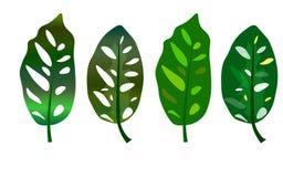 web Folhas verdes tropicais isoladas no fundo branco ilustração stock