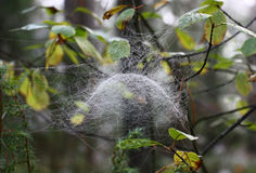 Web in the form of a dome. Royalty Free Stock Photos