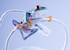 Web frog Stock Photos