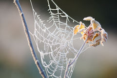 Web frozen. A spider's web frozen in frost Stock Images