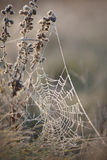 Web frozen. A spider's web frozen in frost Stock Image